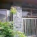 2003062901.jpg